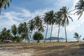 Sandy beach with palm trees on blue sky background with white clouds. Samui Royalty Free Stock Photo