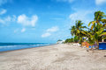 Sandy beach in same ecuador long stretch of lined by palm trees Royalty Free Stock Image