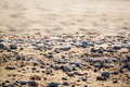 Sandy beach with small pebbles and smooth water, selective focus. Royalty Free Stock Photo