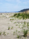 Sandy beach with vegetation grasses encroach on the wide in olympic national park washington Stock Photos