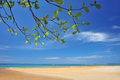 Sandy beaches branches phuket thailand Royalty Free Stock Photo