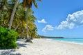 Sandy caribbean beach con gli alberi del cocco Immagine Stock Libera da Diritti