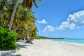 Sandy caribbean beach mit kokosnuss palmen Lizenzfreies Stockbild