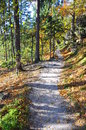 Sandy forest path in fall saxon switzerland saxony germany Royalty Free Stock Photography