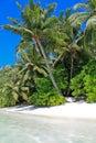 Sandy Palm Beach con le palme dei Maldives Immagini Stock Libere da Diritti
