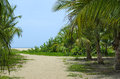 Sandy path through coconut palm tree forest to the beach Royalty Free Stock Image