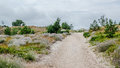 Sandy pathway to the baltic sea lithuania Royalty Free Stock Photography