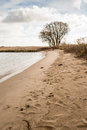 Sandy river beach and a bare tree Royalty Free Stock Photo
