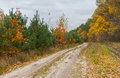 Sandy road in mixed forest Royalty Free Stock Photo