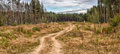 Sandy road in the  pine forest Royalty Free Stock Photo