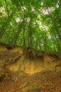Sandy scarp inside beech forest poland holy cross mountains Stock Image