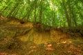 Sandy scarp inside beech forest poland holy cross mountains Royalty Free Stock Photos