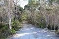 Sandy Track through melaleuca trees West Australia Stock Photos