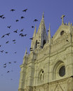 Santa ana covered in birds view of the cathedral el salvador Stock Photos