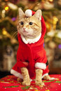 Santa cat male red wearing costume Royalty Free Stock Photos