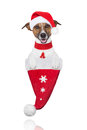 Santa christmas dog in a hat Royalty Free Stock Images