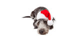 Santa Crossbreed Dog Laying With Copyspace Royalty Free Stock Photo