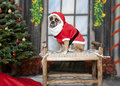 Santa Dog on a bench Royalty Free Stock Images