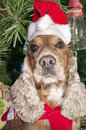A santa dressed puppy dog christmas xmas on tree background Stock Image