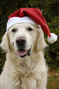 Santa's dog Royalty Free Stock Photo
