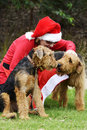 Santa's little helpers woman in Santa Claus costume & two big dogs Royalty Free Stock Photo