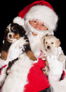 Santa with two puppies Stock Photos