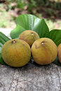 Santol fruit on the leaves sweet taste and domestic fruits in thailand Stock Image