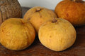 Santol fruit on white background Royalty Free Stock Photography
