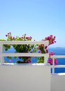 Santorini terrace with flowers greece Stock Photo
