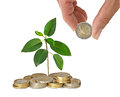 Sapling growing from coins Royalty Free Stock Photo