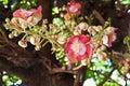 Sara Buddha Flower Stock Afbeeldingen