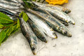 Sardines and anchovies on ice fresh Royalty Free Stock Photography