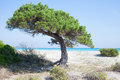 Sardinian coast of mediterranean sea small pine on beach near san teodoro italy Stock Photo