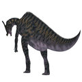 Saurolophus Dinosaur Tail Royalty Free Stock Photo
