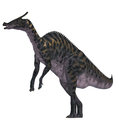 Saurolophus Dinosaur on White Royalty Free Stock Photo