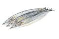Saury fish Royalty Free Stock Photo