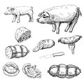 Sausage set of vector sketches Stock Photography