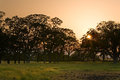 Savanna sunset over meadow and trees Stock Photos