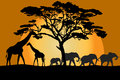 Savannah landscape with animals at sunset Stock Images