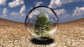 Save tree inside glass bubble in desert Stock Photo