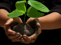Save trees are our friends we need to them in order to survive lets make our earth green Stock Photo
