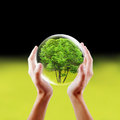 Saving nature concept hands holding a tree in a protected bubble Stock Images