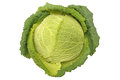 Savoy Cabbage Stock Photography