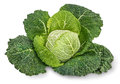 Savoy cabbage on white background isolated Stock Image