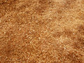 Sawdust Royalty Free Stock Photos