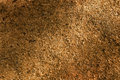 Sawdust texture Stock Photos