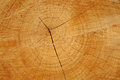 Sawn wood texture. Royalty Free Stock Photography