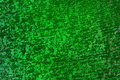 Scale Background, Green Snake Skin Pattern, Abstract Texture Royalty Free Stock Photo
