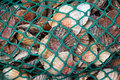 Scallop catch Royalty Free Stock Photography