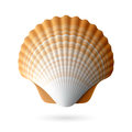Scallop seashell illustration on white Stock Photography
